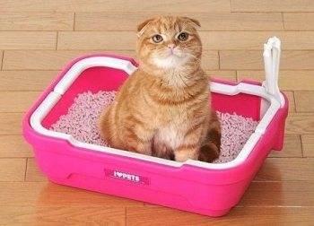 Почему кот или кошка мочится часто и мало: причины постоянных позывов к мочеиспусканию маленькими порциями, лечение