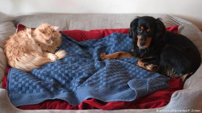 Кошка или собака, кого лучше выбрать фрилансеру?