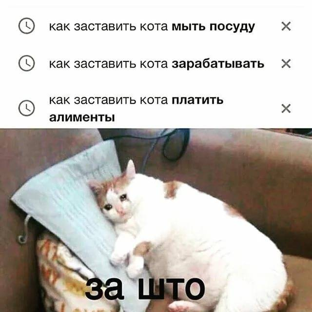 Как заставить кота есть после болезни: через шприц
