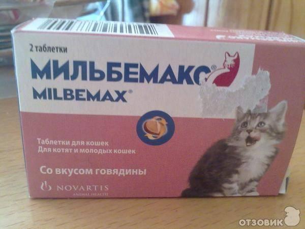 С какого возраста можно глистогонить котят в первый раз
