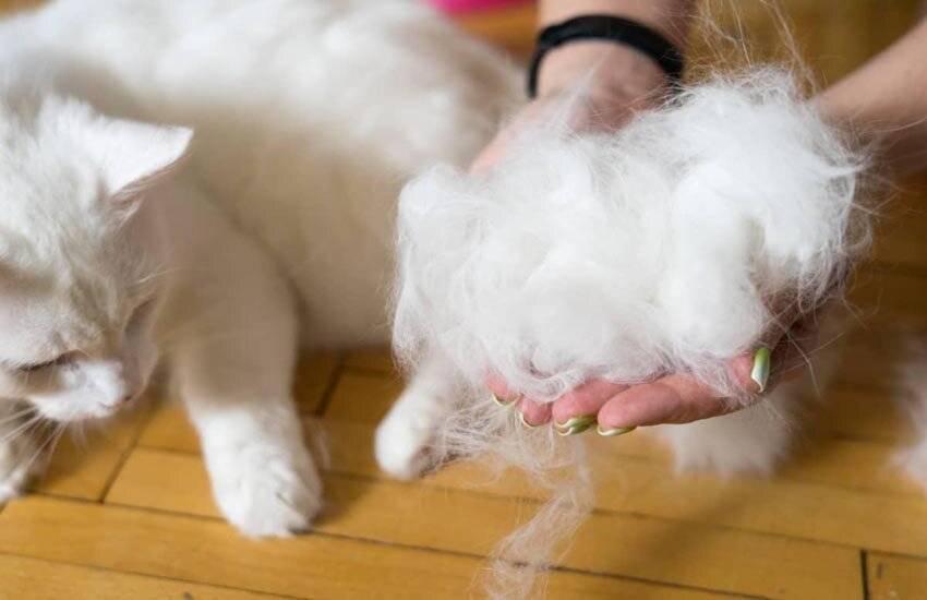 Кошка сильно линяет: как решить проблему