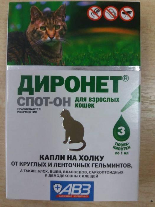 Диронет спот-он для кошек: описание препарата и противопоказания, инструкция по применению и цена