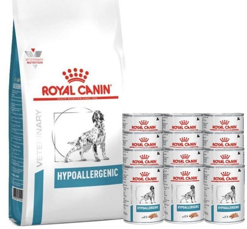 Советы по выбору гипоаллергенного сухого корма для кошек