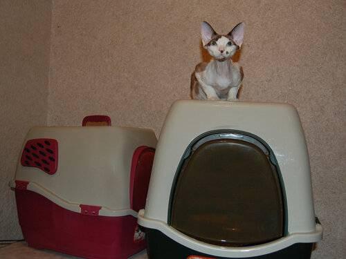 Туалеты-домики для кошек: особенности, виды, советы по выбору и размещению
