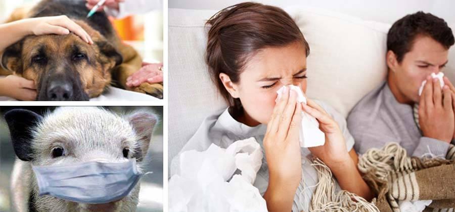 Могут ли коты заразиться от человека простудой
