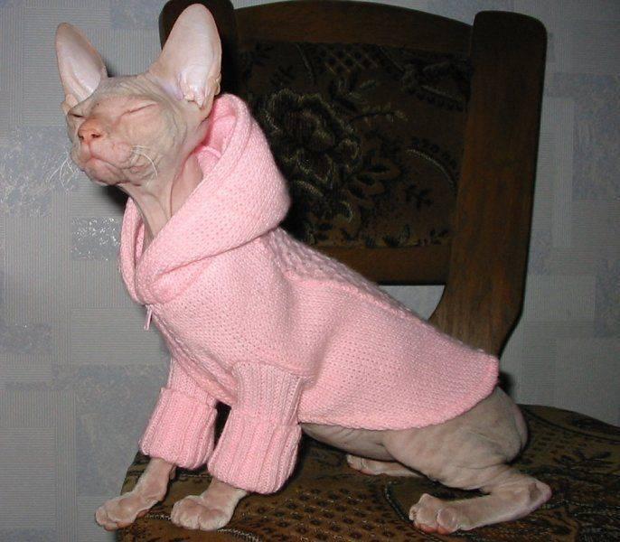 Правила грамотной вязки кошек