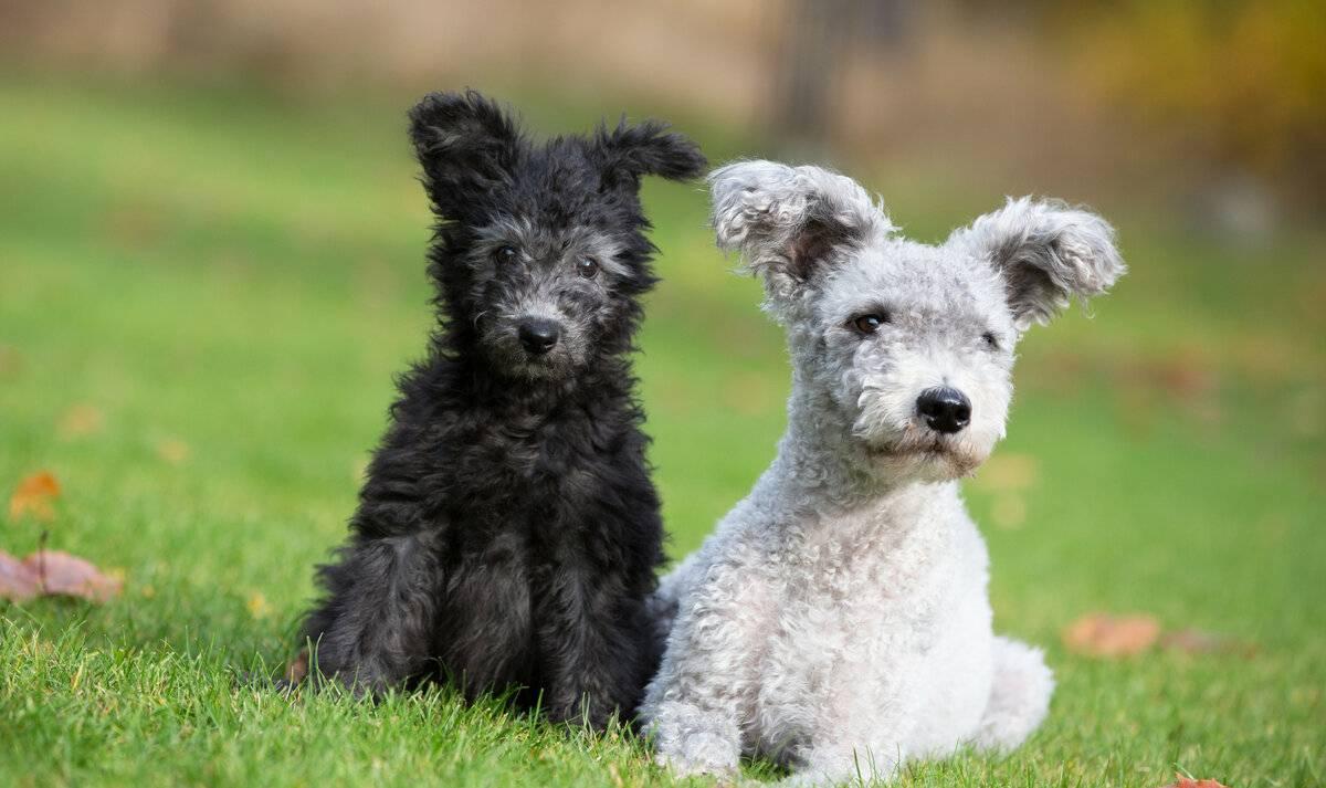 Щенки добермана: фото, уход и содержание, цена на молодых собак в россии в рублях, сколько стоят за рубежом?