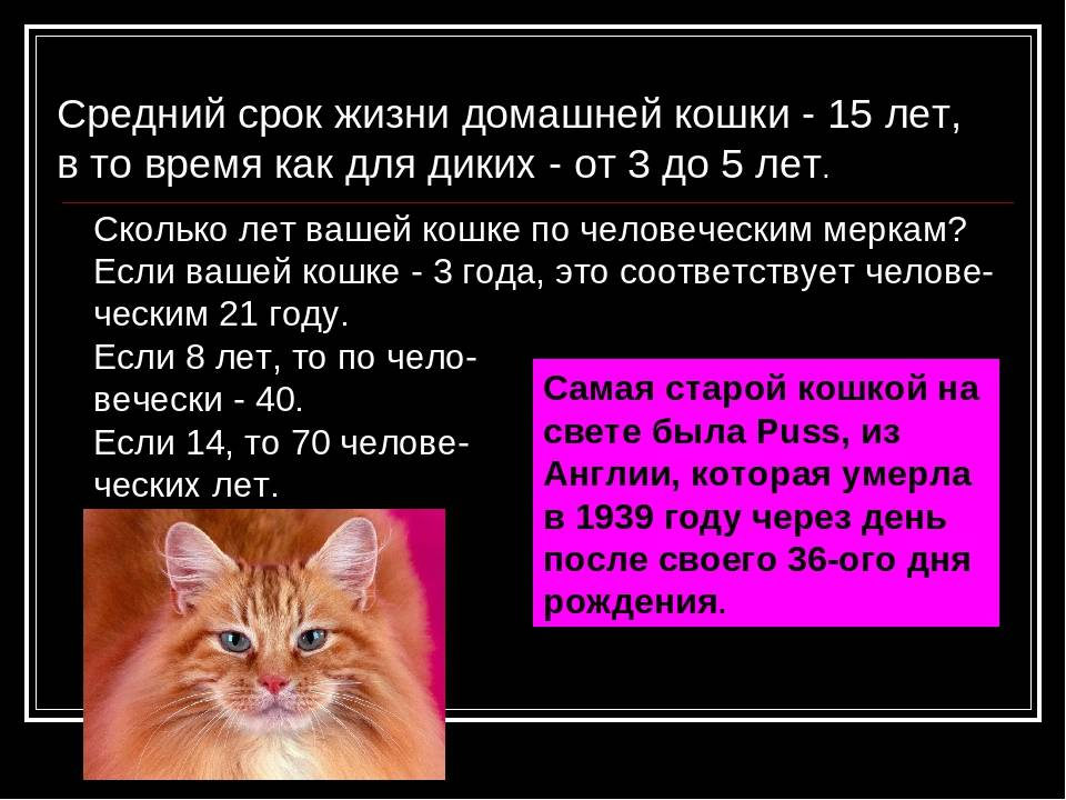 Cколько лет живут кошки в домашних условиях?