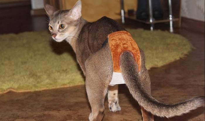 Как метят коты