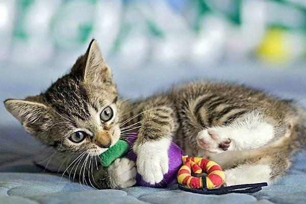 У котенка выпадают зубы