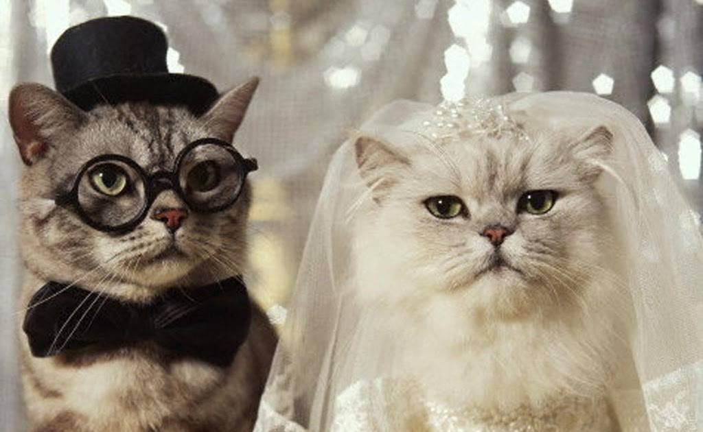 Как понять чего хочет кошка | кот и кошка