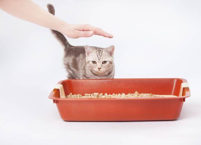 Как приучить котенка к сухому корму?