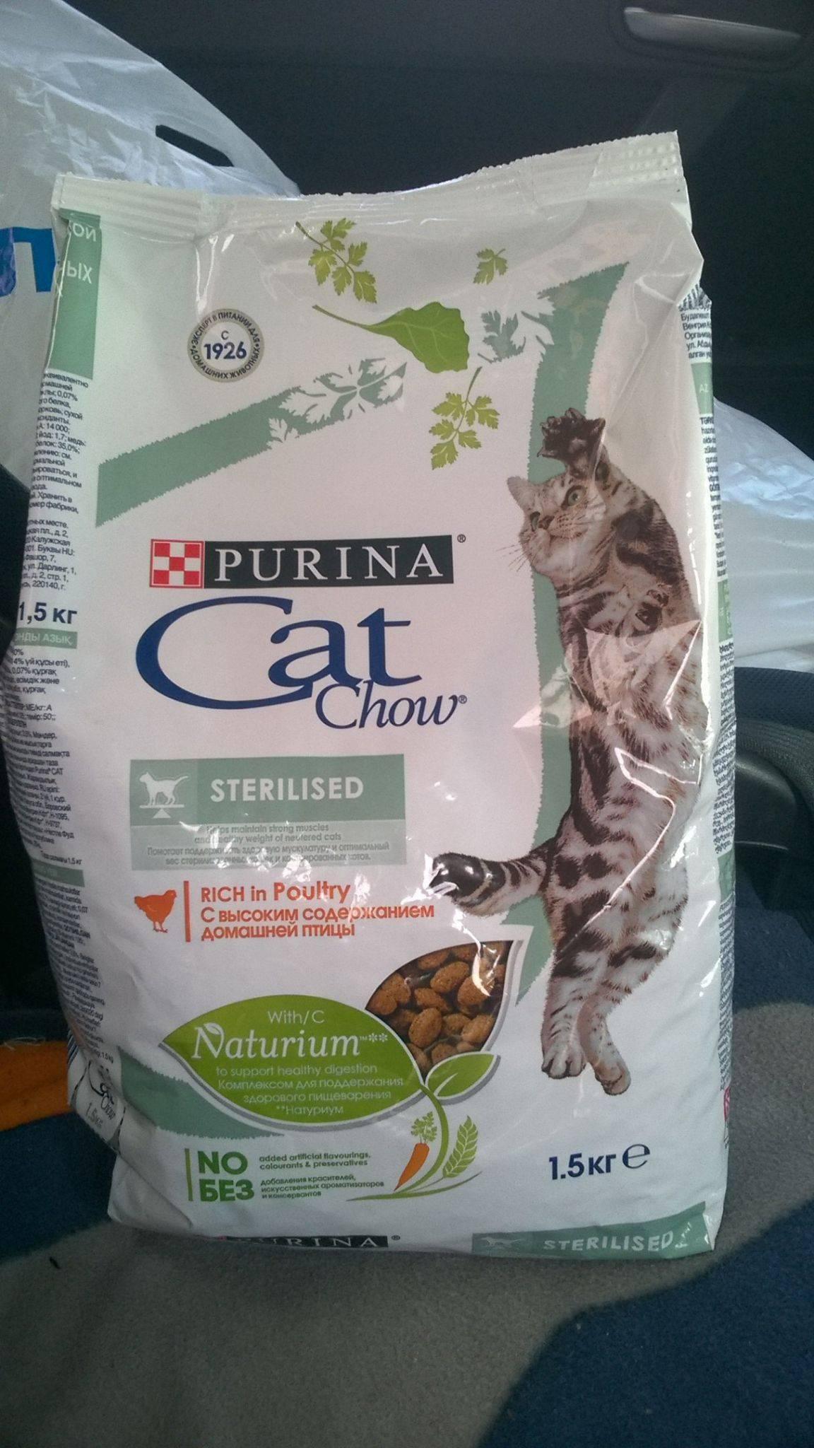 Каким должен быть корм для кастрированных котов: рекомендации по выбору