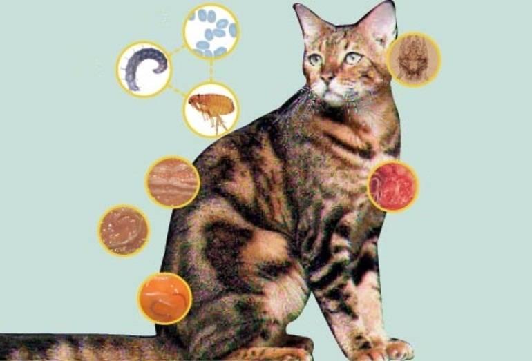 Разновидности глистов у кошек, их симптомы и лечение