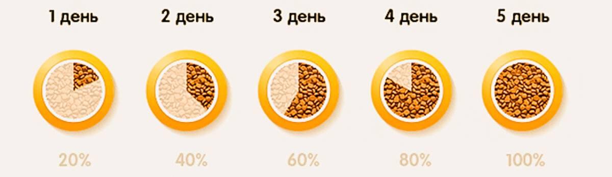 Как приучить котенка к сухому корму: причины отказа и способы перевода
