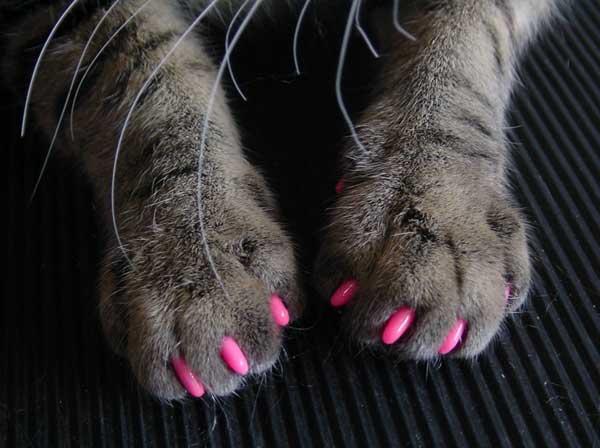 Антицарапки для кошек (мягкие накладки на когти): как выбрать, надеть