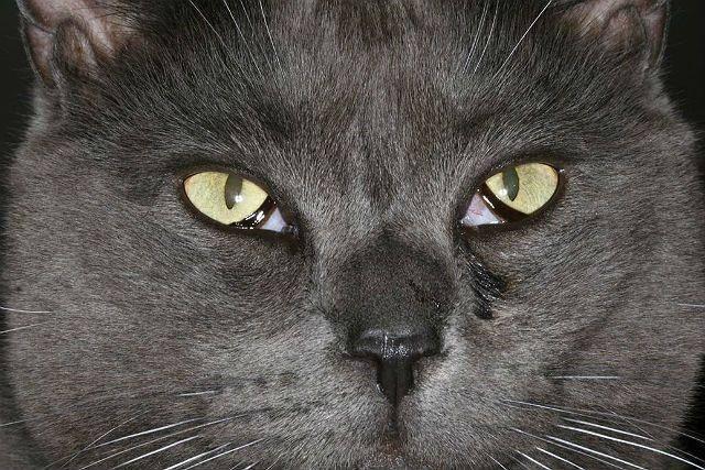 У кота слезится один глаз — что делать