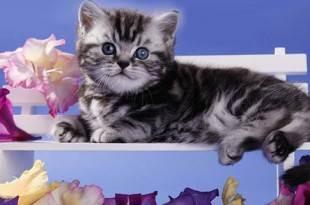 Посоветуйте корм для котёнка шотландца - запись пользователя татьяна (hotty) в сообществе домашние животные в категории кошки. болезни, прививки, советы по уходу - babyblog.ru