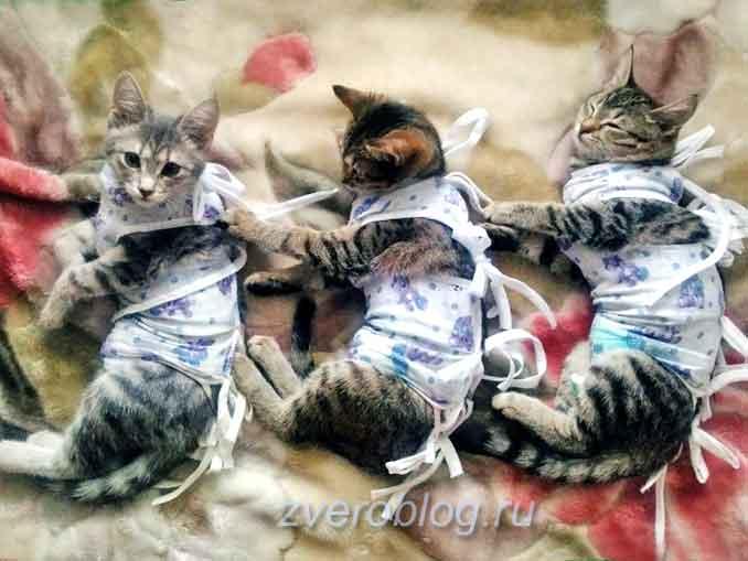 Правильный уход за кастрированным котом, когда кормить в период реабилитации