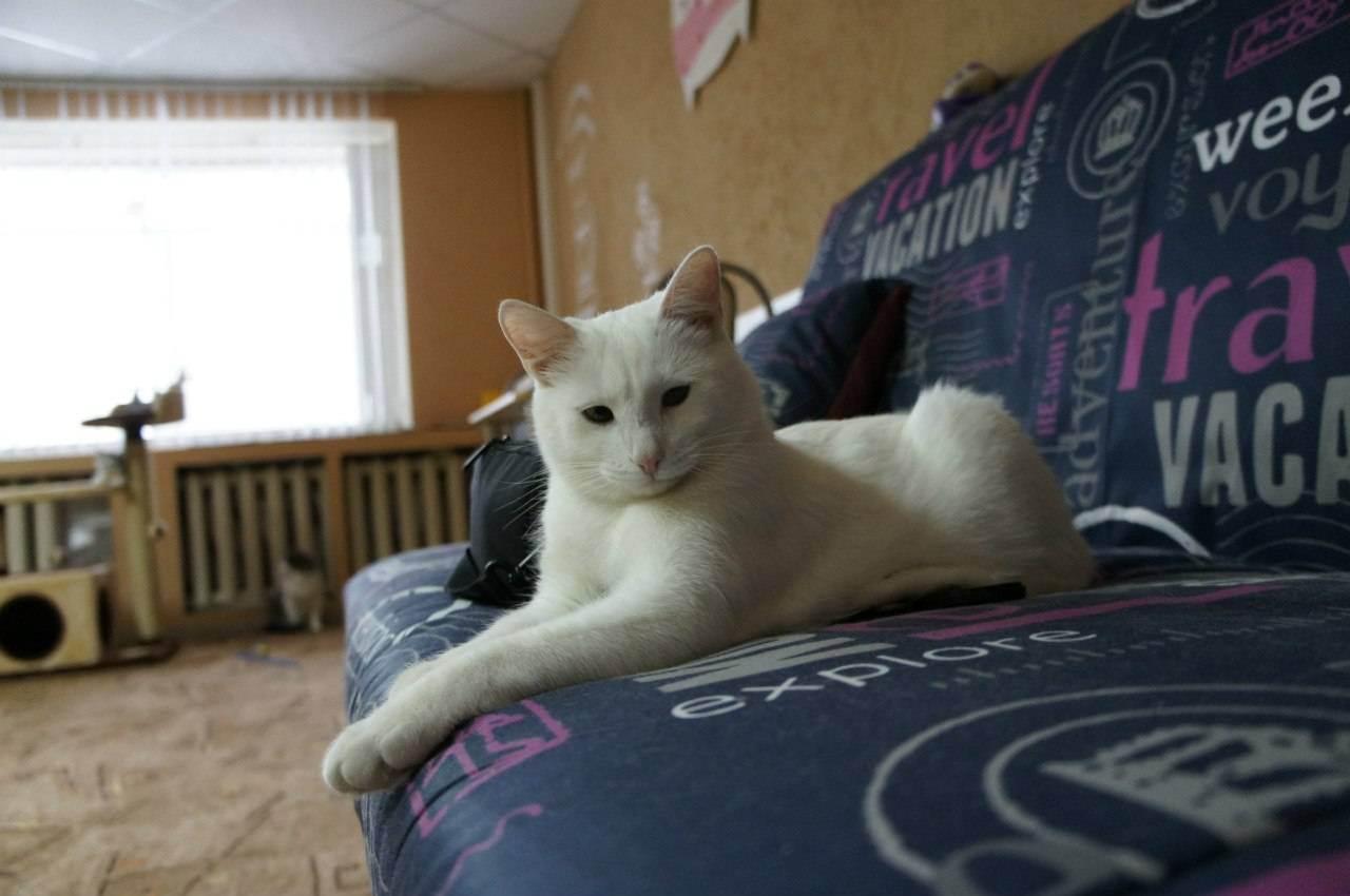 Можно ли оставлять кошек одних. как оставить кота дома на время отпуска
