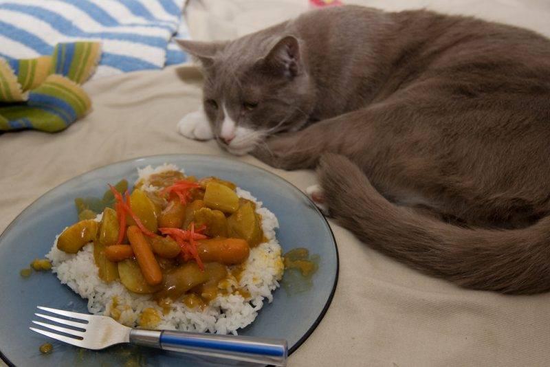 Почему кот может отказываеться от еды