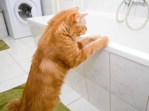 Какая вода для кошки нужна для купания ?