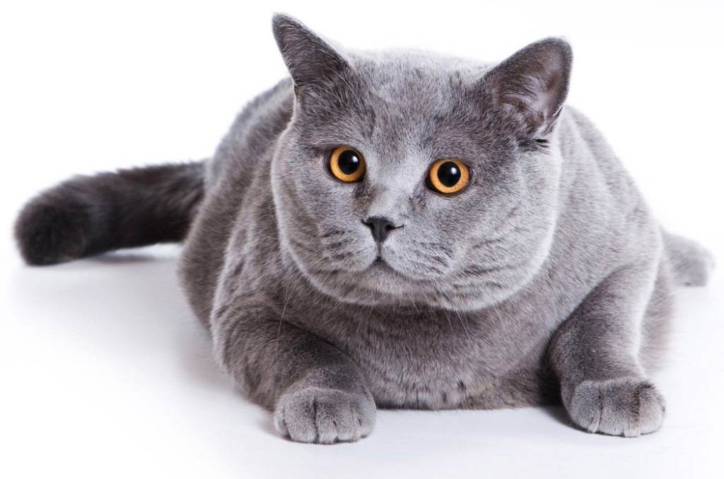 Почему кот или кошка отказывается пить воду и что в этом случае делать, как научить котенка лакать из миски?