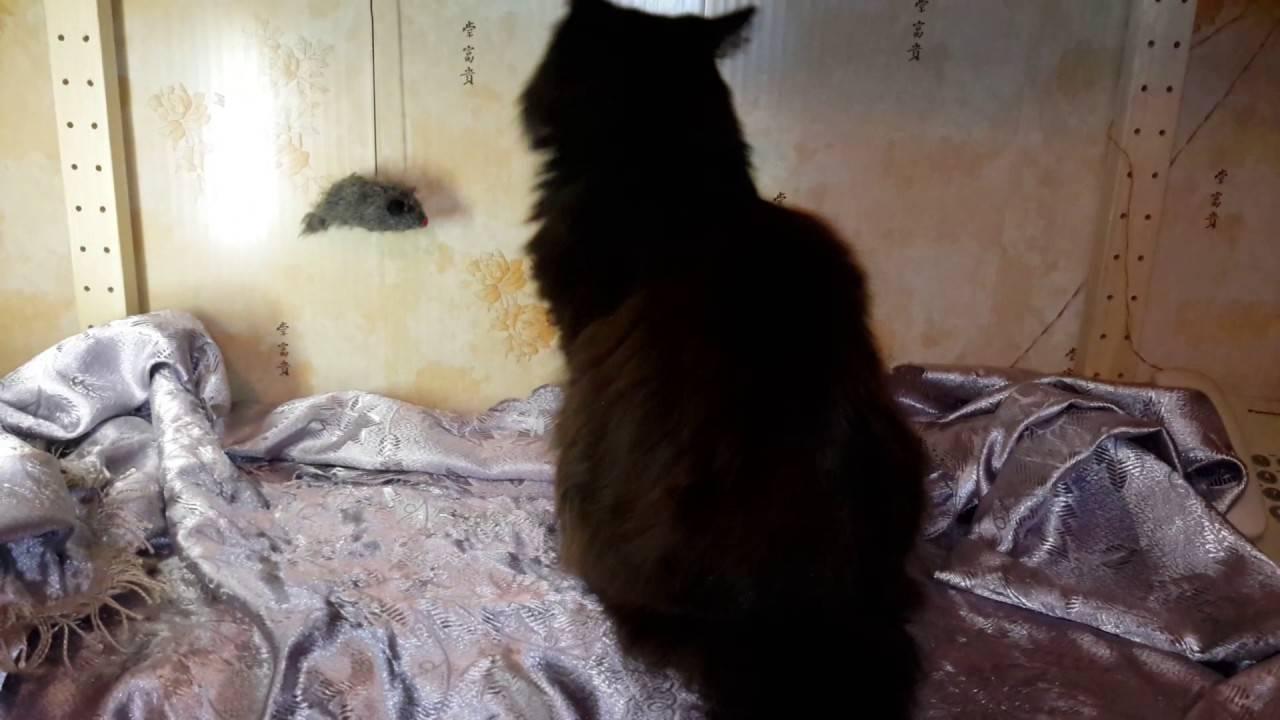 Что делать, если кот съел отравленную мышь? кот съел отравленную мышь – симптомы, помощь, последствия девушка глотает мышь.