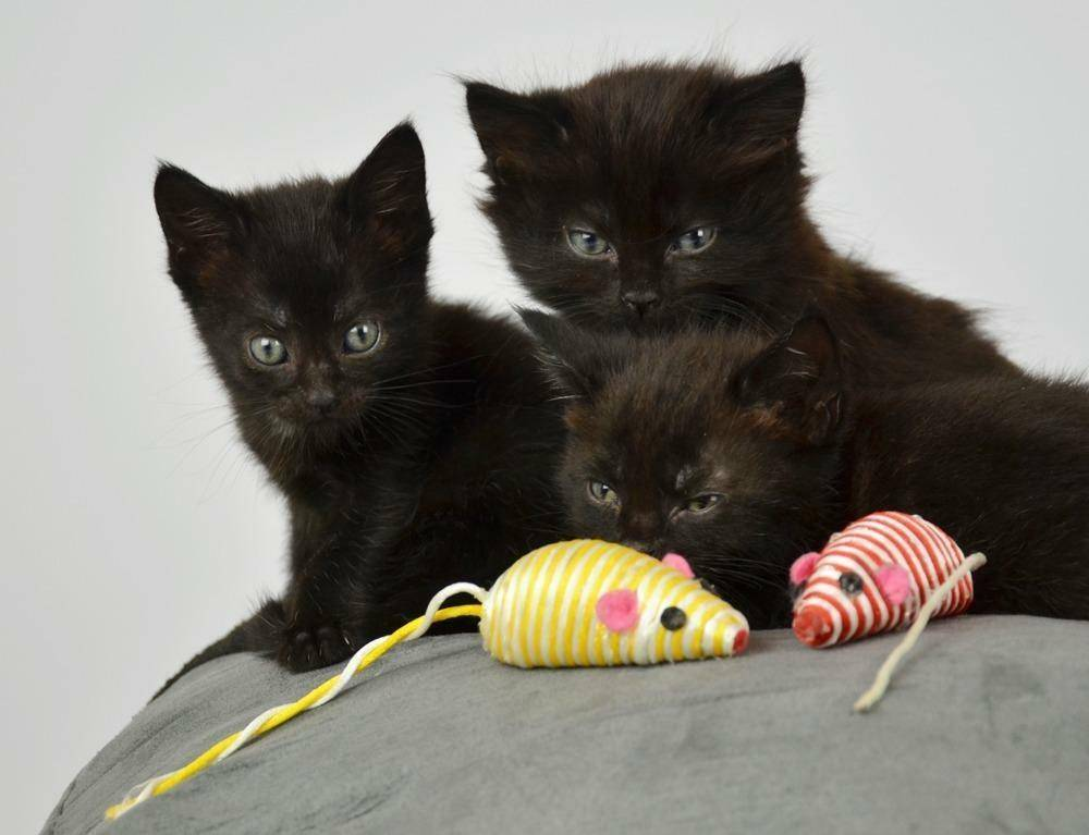 Все о кошках: описание, виды и содержание