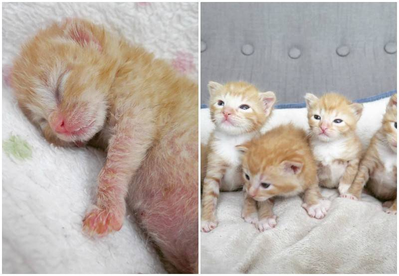 Когда котята открывают глаза после рождения и как за ними ухаживать