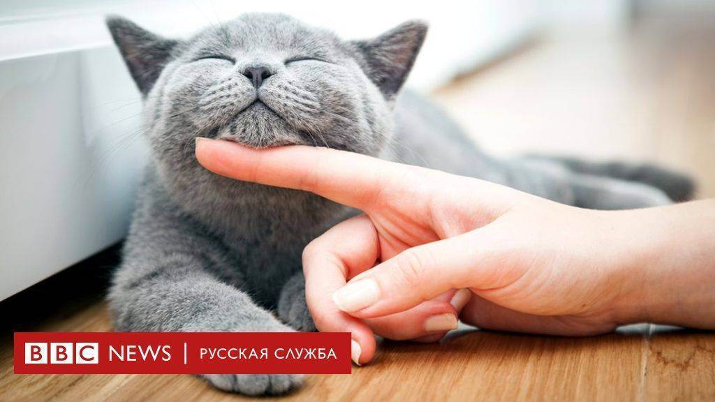 Можно ли давать сырую курицу и куриные кости котам? | кот и кошка