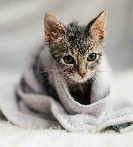 Как мыть котенка правильно? нужно ли его купать в 1, 2, 3 месяца?