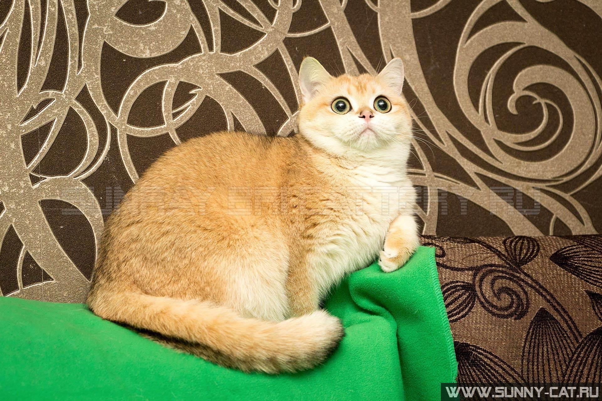 Как выбрать кличку для кошки на английском языке: самые интересные варианты