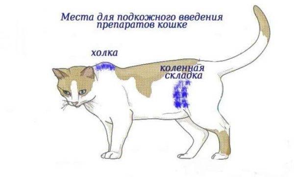 Как самостоятельно правильно сделать кошке укол в холку или внутримышечно