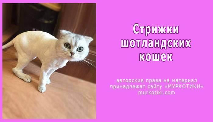 Первая стрижка кошки: к чему готовиться?