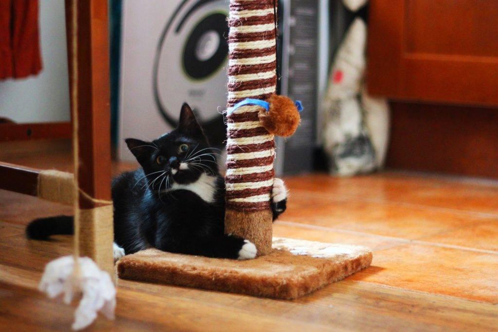 Как отучить кошку драть обои и мебель: эффективные работающие способы