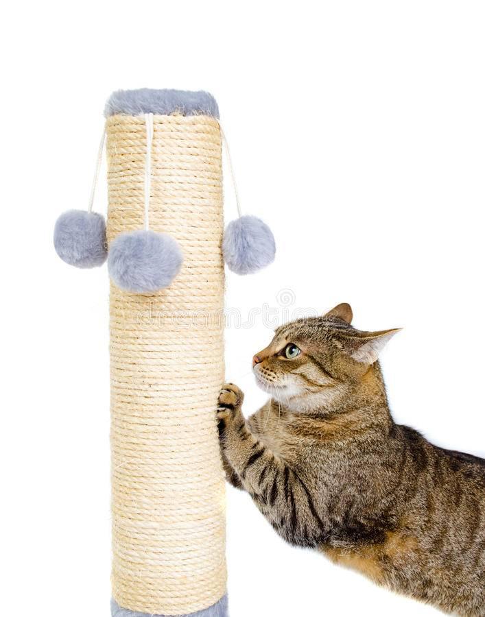 Как отучить кота или кошку точить когти о мебель и драть обои, что делать, чтобы приучить питомца к когтеточке?
