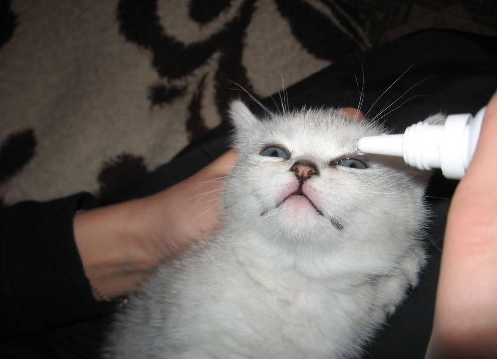 Чем можно лечить глаза у кошки - муркин дом