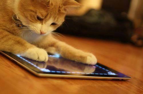 Как развлечь своего кота: специальные игры для планшетов на android