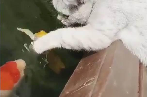 Можно ли кошкам рыбу – правила кормления, рекомендации