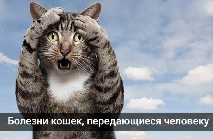 Симптомы и лечение болезней кошек