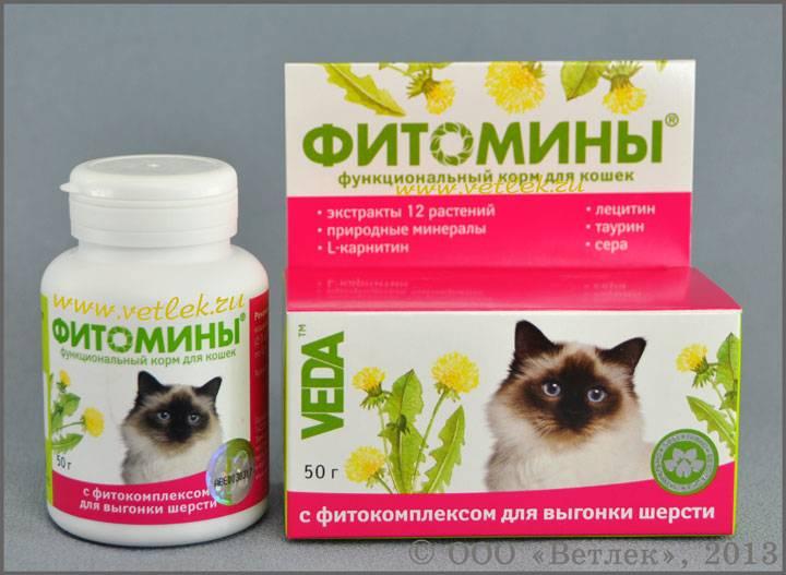 Чем кормить кошку при запоре: полезные продукты и правильный рацион