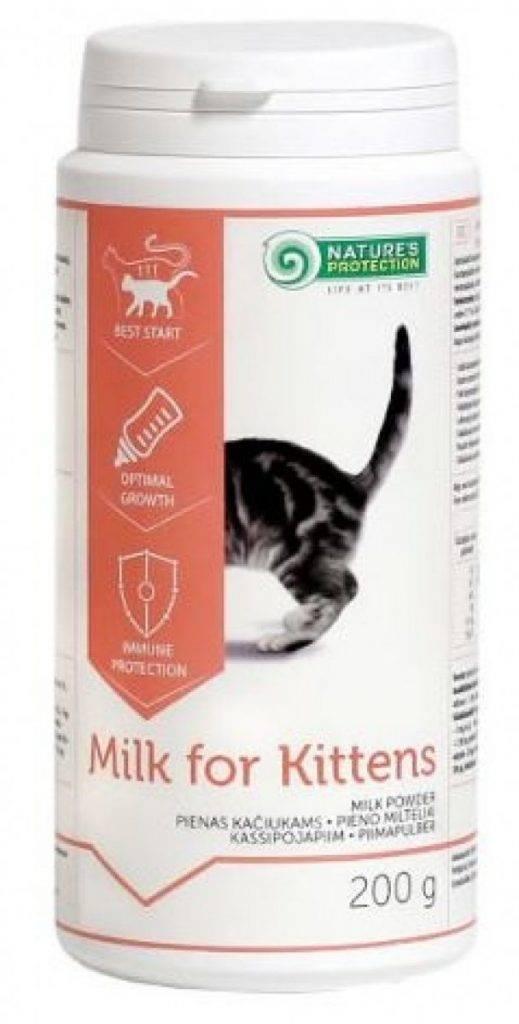 Заменитель кошачьего молока — самые знаменитые смеси и их жирность
