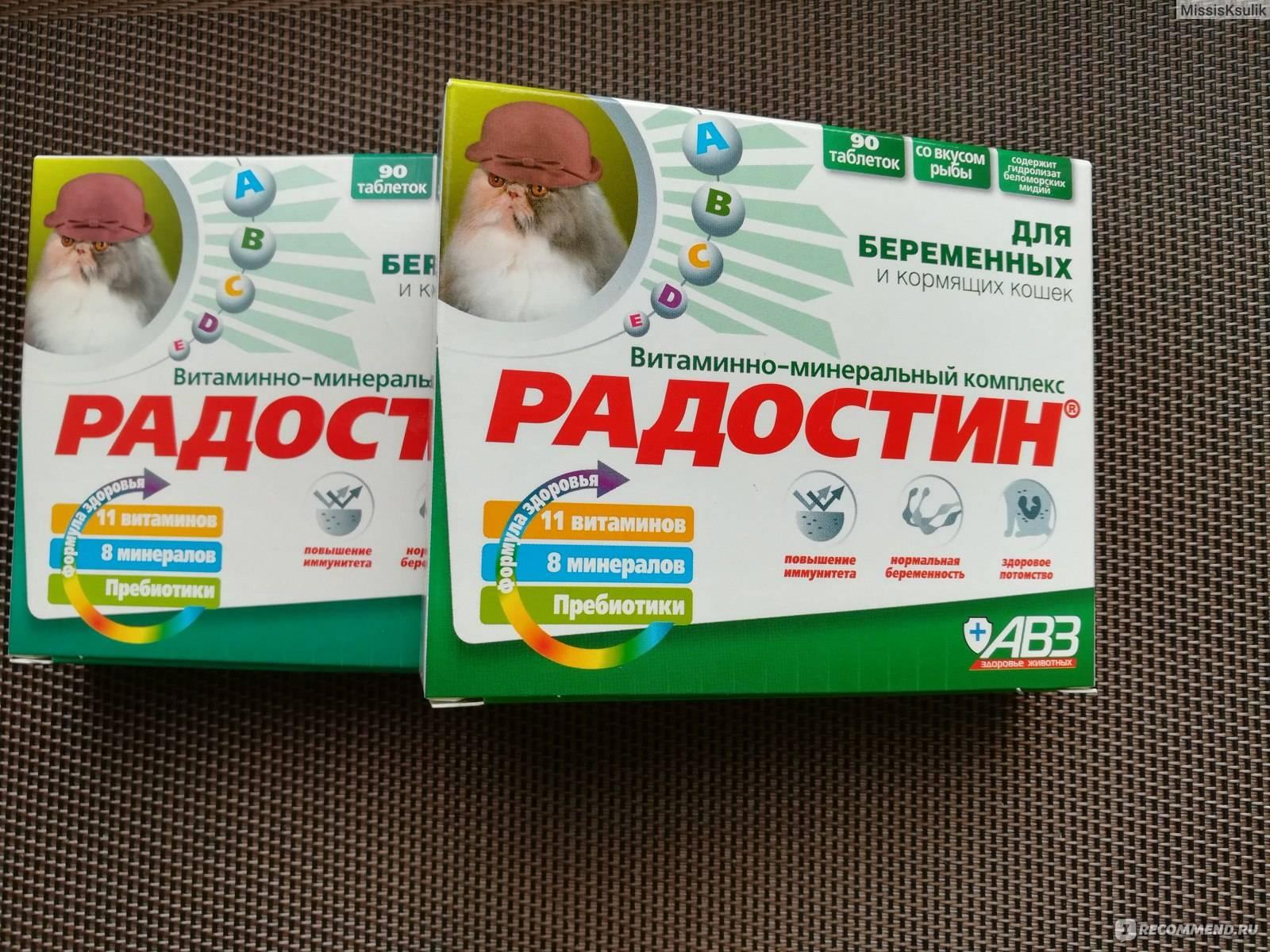 Чем можно кормить беременную кошку. витамины для кошек при беременности
