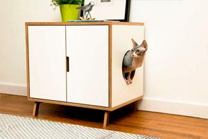 Как разнообразить жизнь домашних любимцев, или лайфхаки для котов и кошек