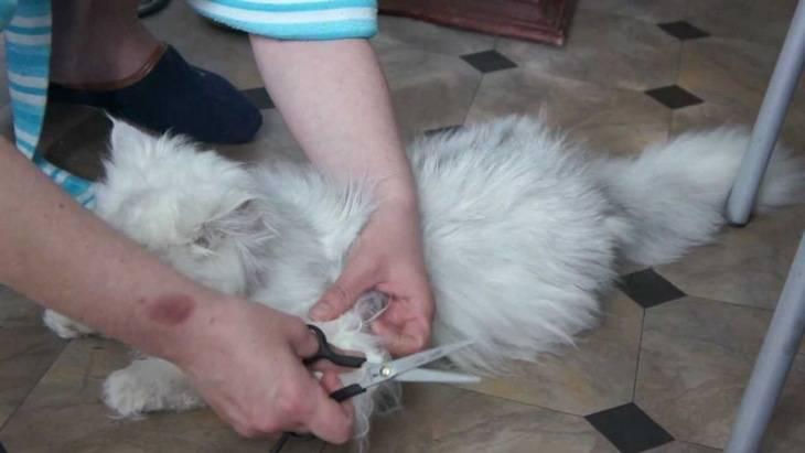 Как убрать у кота колтуны в домашних условиях: колтунорез для кошки