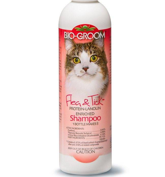 Как выбрать шампунь для кошек от аллергии - zhivomag