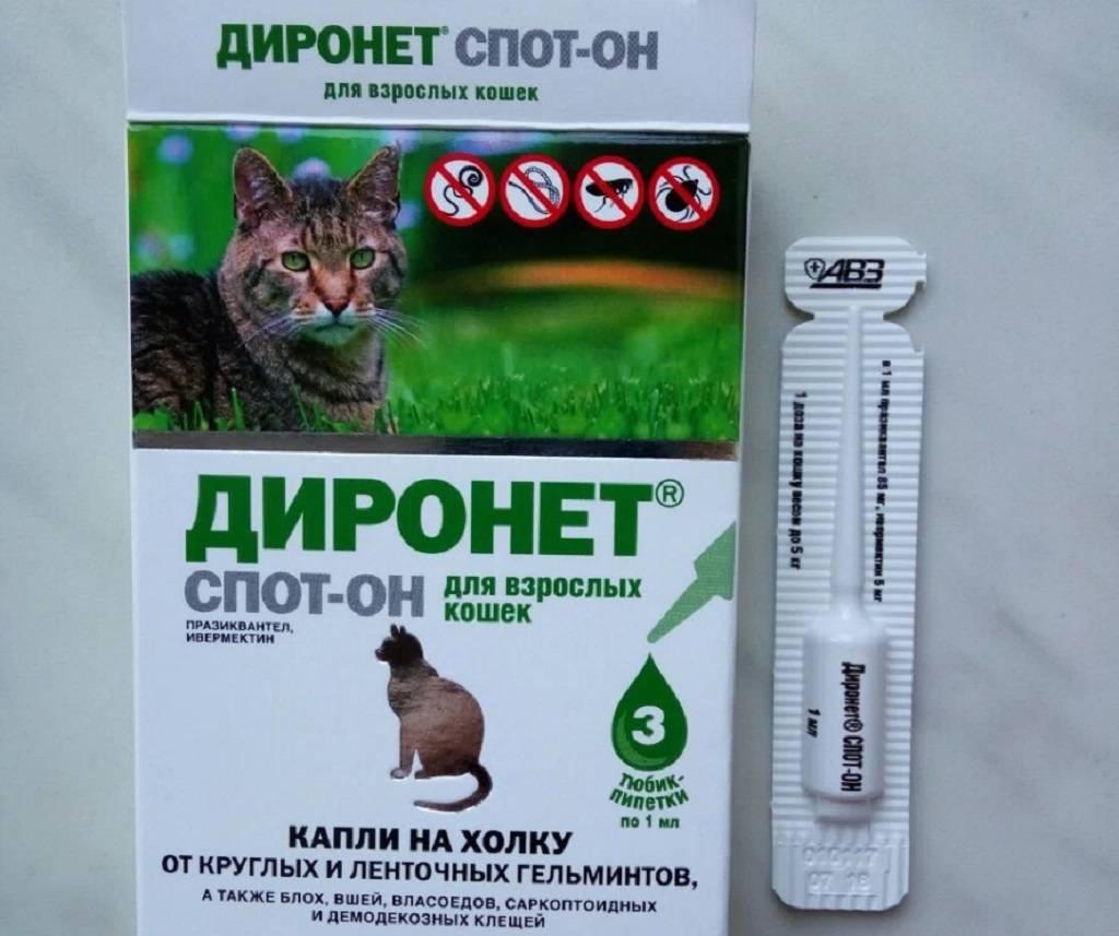 Капли от блох для кошек на холку: как капать, помогают ли они от глистов и клещей?