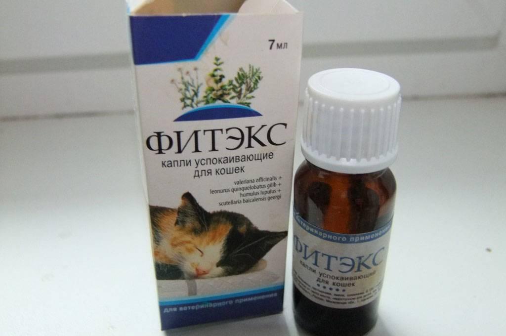 Успокоительное для кошек при стрессе и агрессии: какие успокаивающие капли и таблетки можно дать?