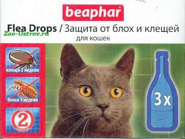 Как вывести блох и вшей у кошки